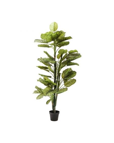 planta decorativa dieffenbachia