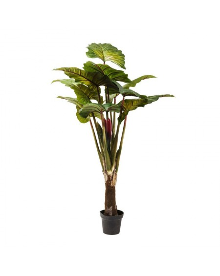 PLANTA DECORATIVA RAINFOREST GREEN