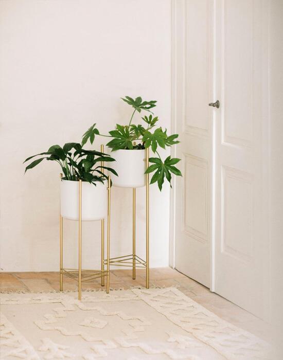 Soporte y macetas altas en blanco para plantas de interior